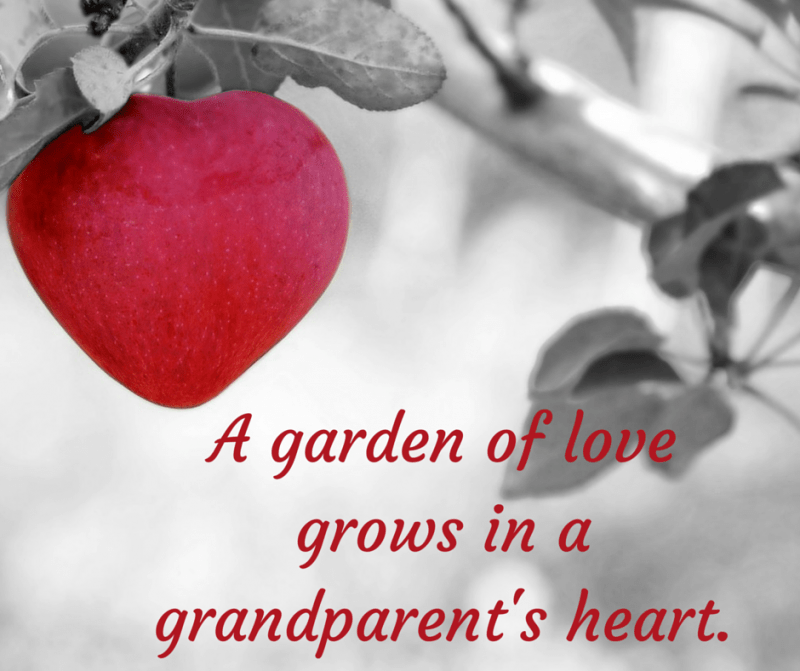 A garden of love grows in a grandparent's heart.