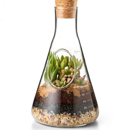 "Glass Terrarium Kit - The garden that ""thrives on neglect,"" is fun to customize, effortless to care for, and a perfect gift for any nature lover, no matter the occasion."