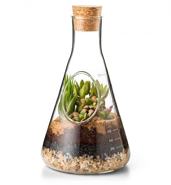 """Glass Terrarium Kit - The garden that """"thrives on neglect,"""" is fun to customize, effortless to care for, and a perfect gift for any nature lover, no matter the occasion."""